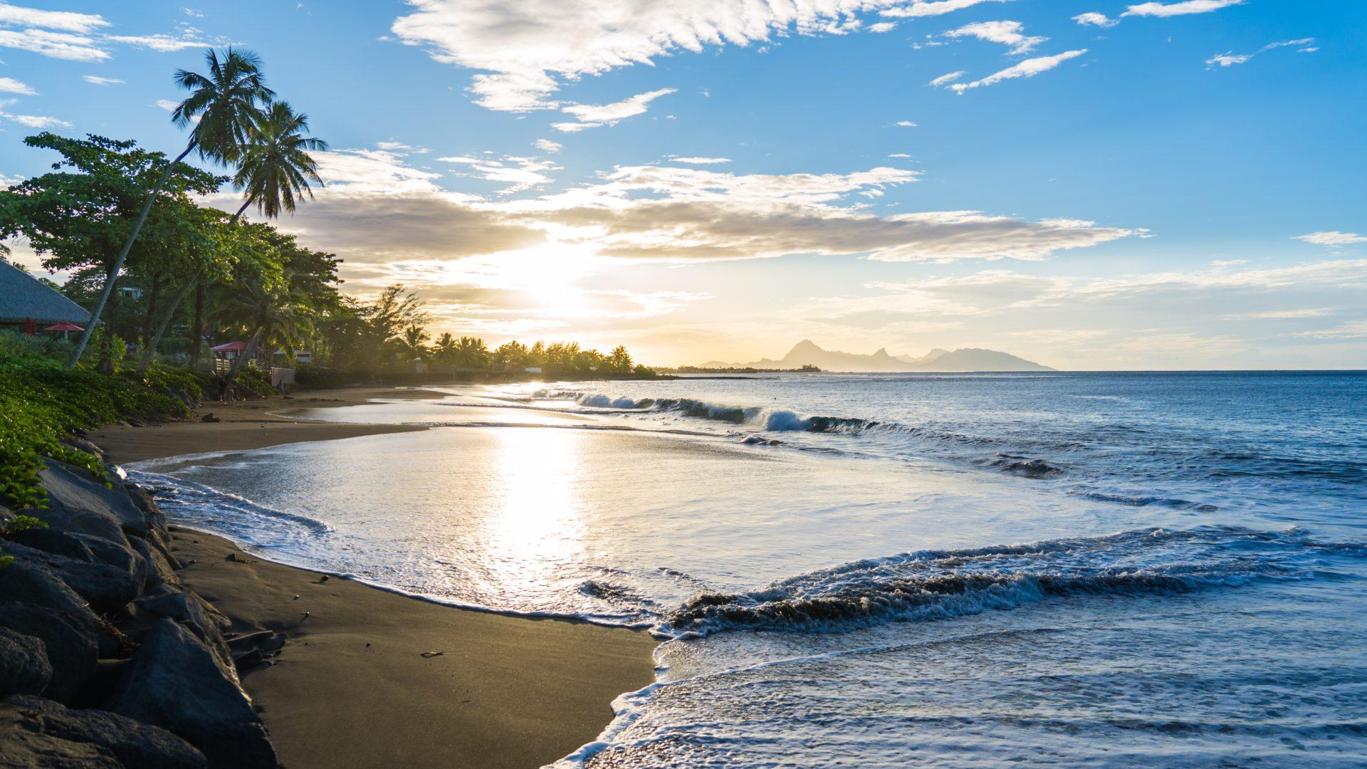 French Polynesia Ra'iatea Ocean Beach Shoreline Palm Tree TJB Superyachts