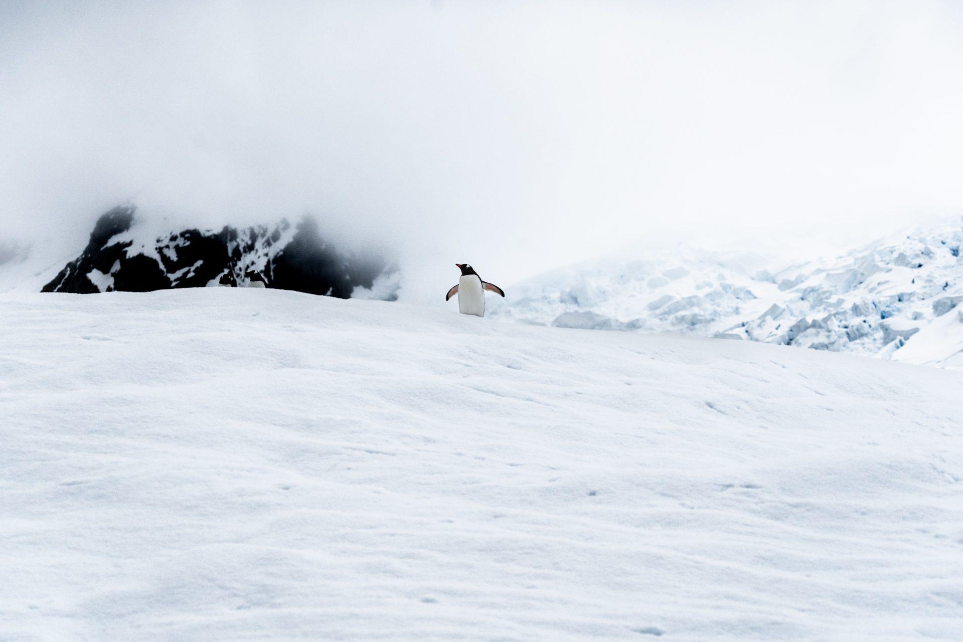 King George Island Penguin Snow TJB Superyacht