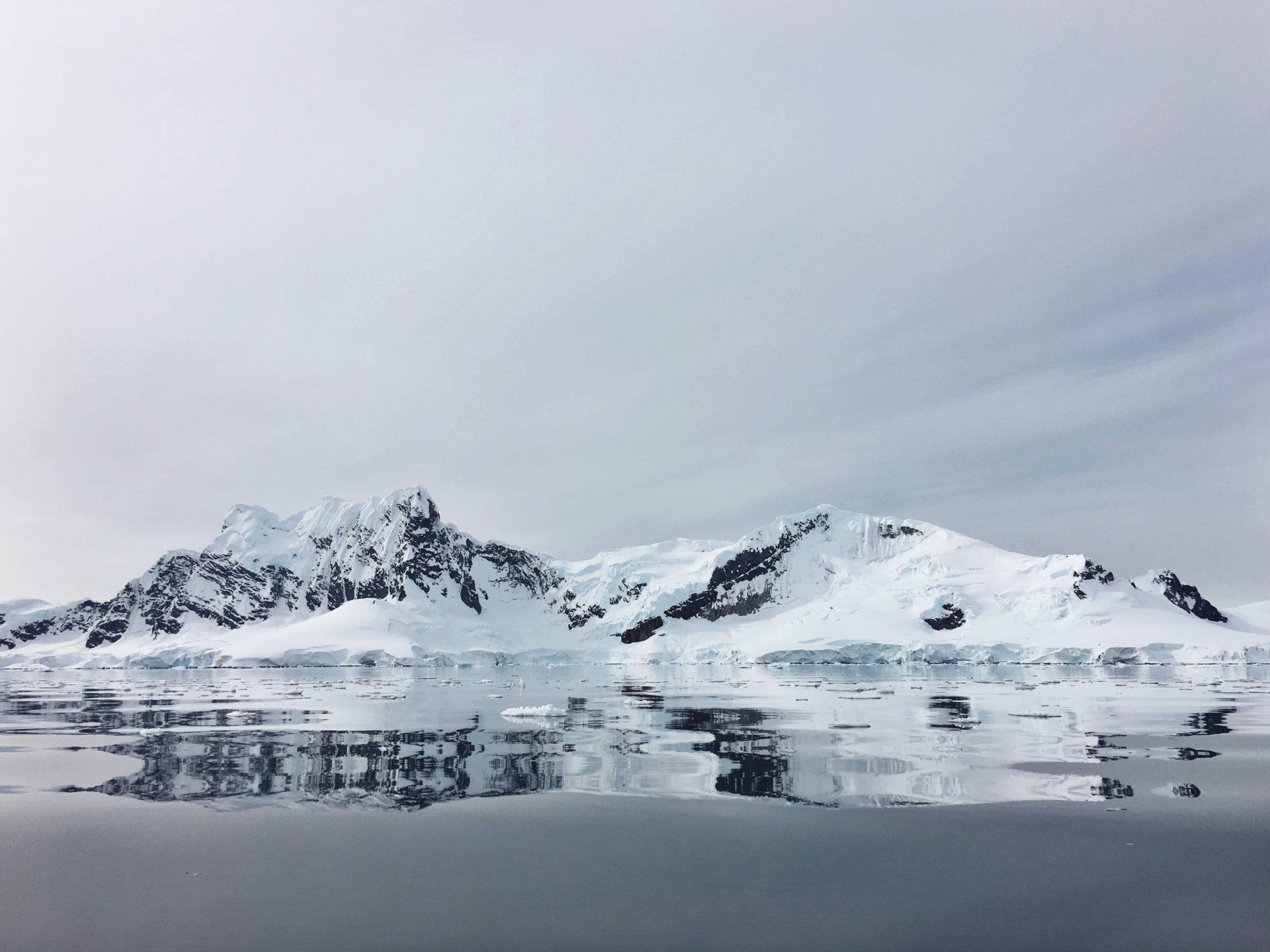 King George Island Penguin Snow- tjb